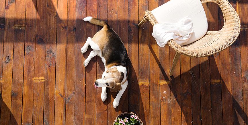 Dog on a terrace