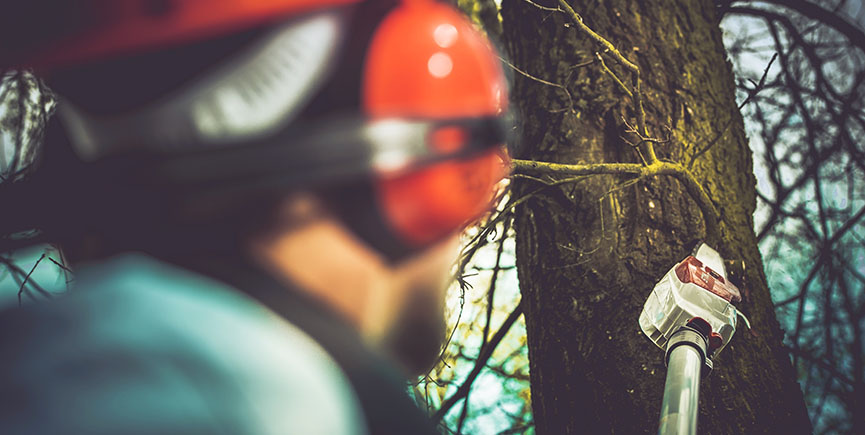 7 Common Reasons Of Tree Removal